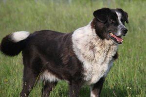 iris hund IMG_0701we
