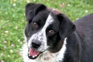 iris hund IMG_2994web