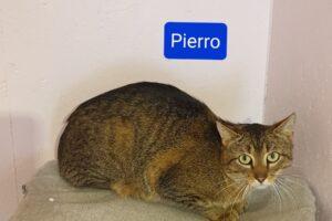 calimero-pierro-027