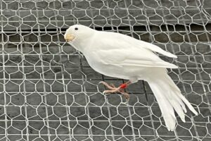 kanarienvogel-fund-HN-02-07-21