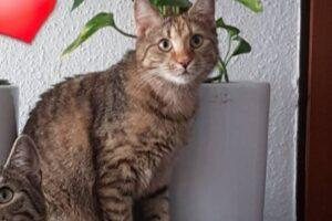 Lilly-Sontheim