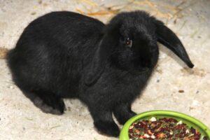 4 alaska kaninchen IMG_2956we