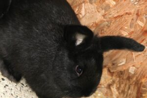 4 alaska kaninchen IMG_2958we